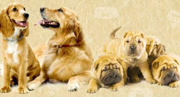 Le corna di cervo per cani: cosa devi sapere