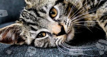 """5 piccole """"coccole"""" per il  tuo gatto"""