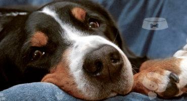 Il mio cane non mangia: cosa posso fare?