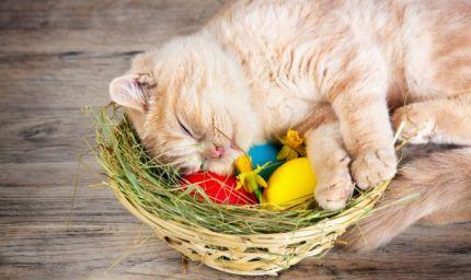 Cani e gatti: 3 consigli per una Pasqua senza pensieri